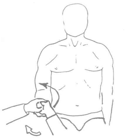 Головок двуглавой мышцы плеча